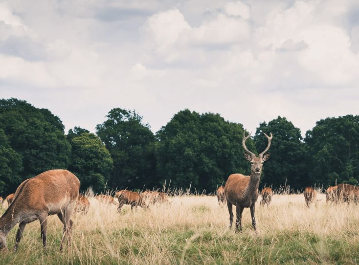 walking in london Richmond Park